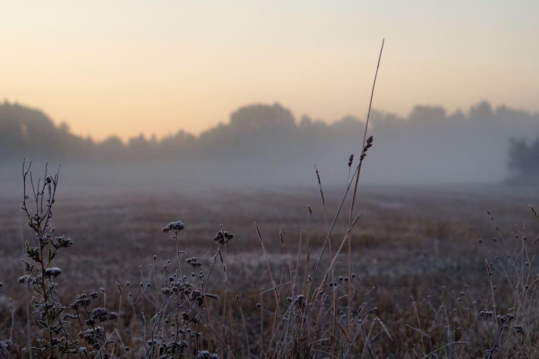 dimma och frost