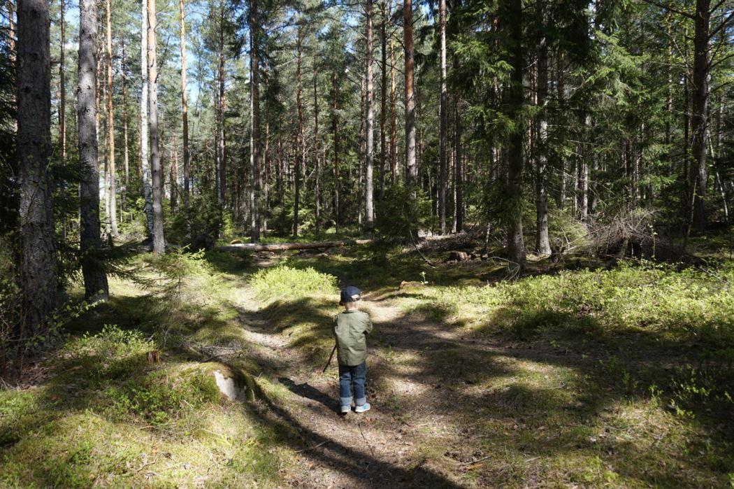 Skogen (2)