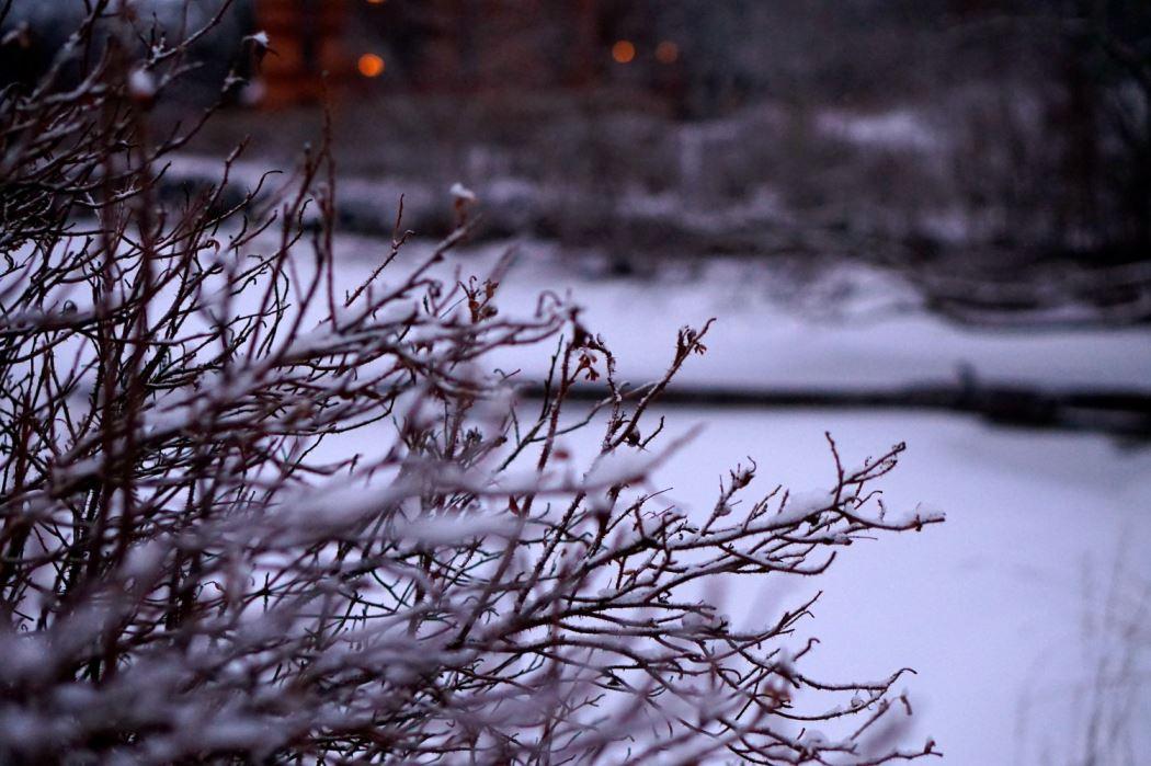 promenad en vintermorgon
