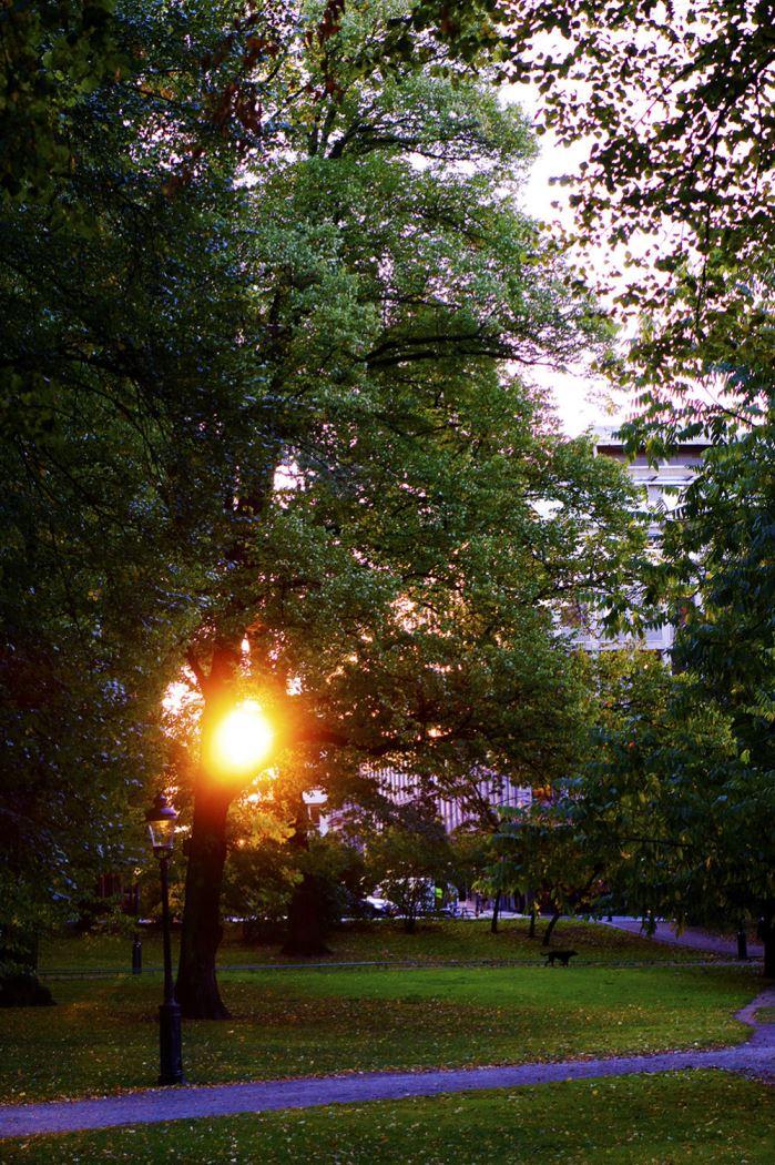 hostmorgon-promenad-6