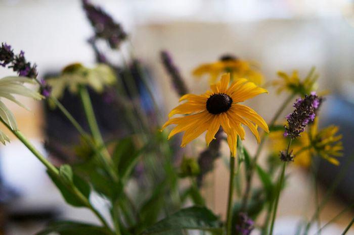 Blommor i en vas