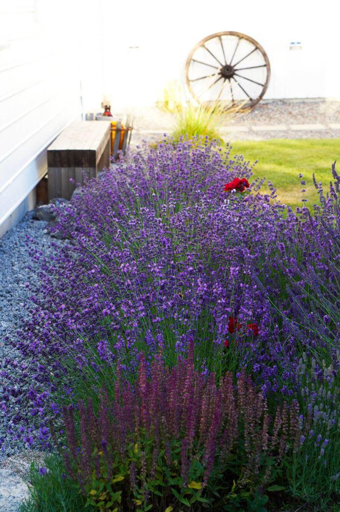 Trädgården på kvällen i sommarsol