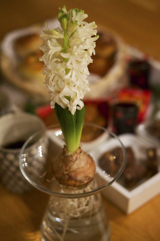En hyacint och en bricka med julfika