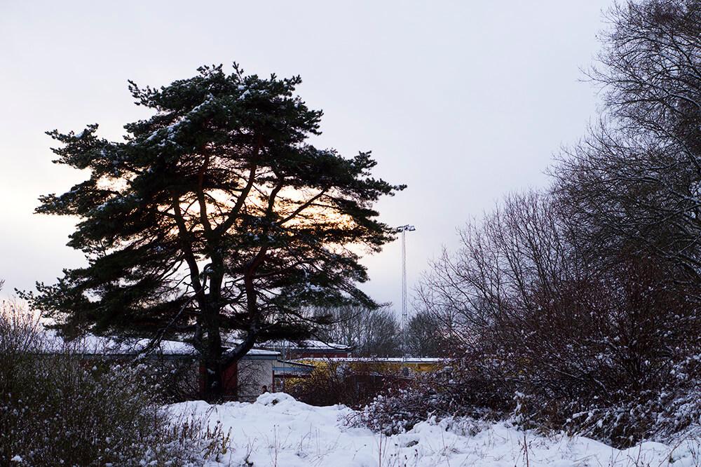 En fin lucia med snö