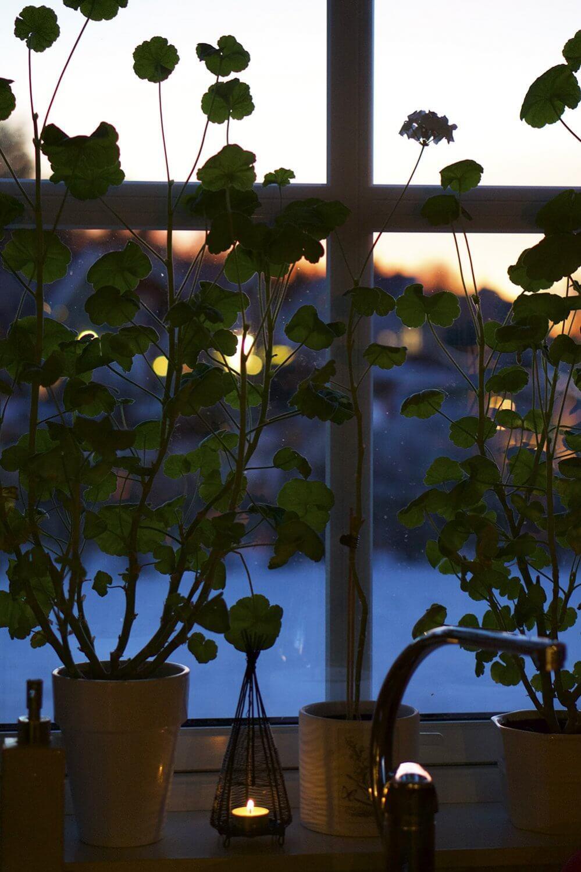 Utsikt från fönstret en eftermiddag i december
