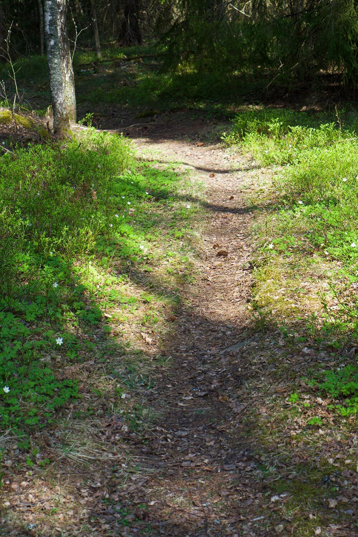 skogspromenad och vitsippor