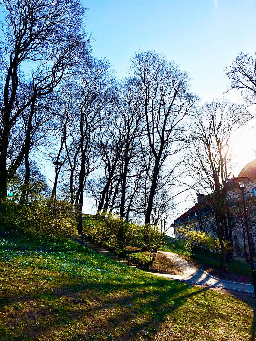 Vacker morgon i april